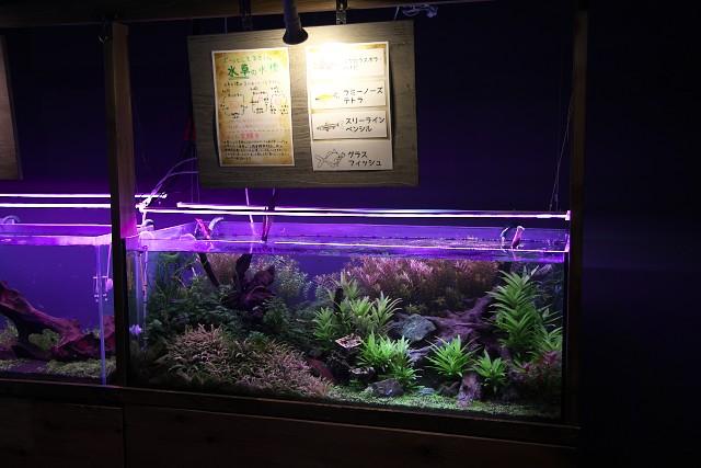伊勢シーパラダイス 水槽展示例