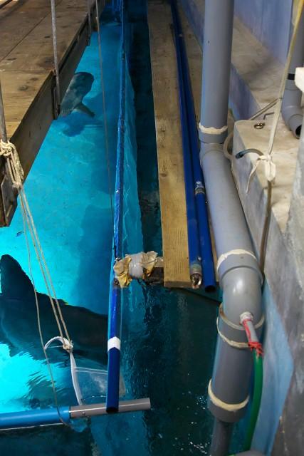 志摩マリンランド マンボウ水槽の裏側