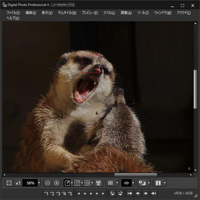 EOS R6動物顔認識の例