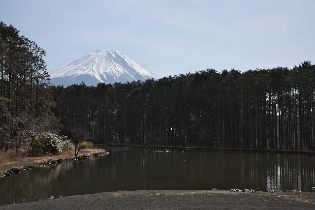 富士花鳥園 屋外の池